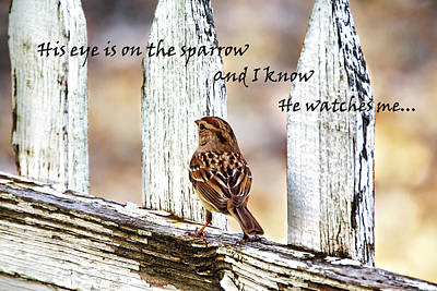 Photograph - His Eye Is On The Sparrow With Quote by Abram House