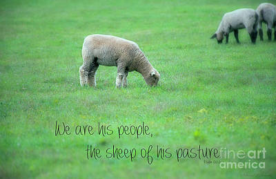 Photograph - His Sheep by David Arment