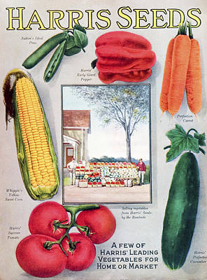 Farmstand Photograph - Historic Harris Seeds Catalog by Remsberg Inc