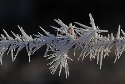 Frost Photograph - Hoar Frost by Gary Wing