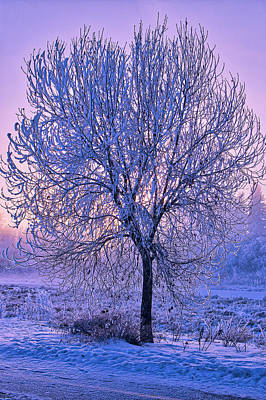 Photograph - hoar frost Sunrise by Darcy Michaelchuk