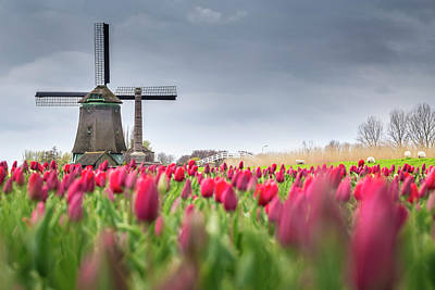 Photograph - Holland Windmill by Stefano Termanini