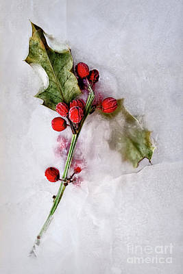 Photograph - Holly 5 by Margie Hurwich