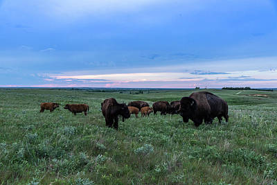 Photograph - Home On The Range by Jay Stockhaus