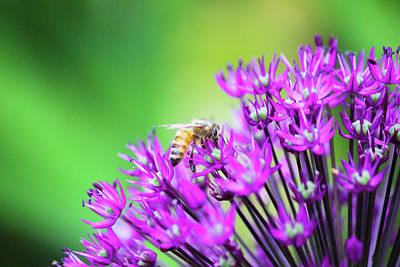 Photograph - Honey Bee by Tiffany Erdman