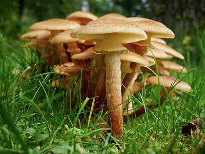 Photograph - Honey Fungus by Jouko Lehto