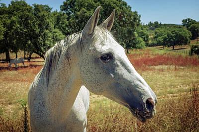 Photograph - Horse Portrait by Carlos Caetano