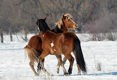 Photograph - Horseplay by Mike Dawson
