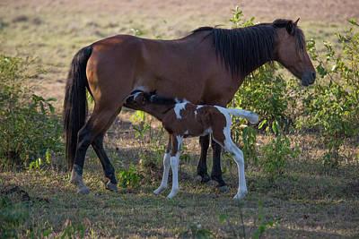 Travel - Horses at Los Llanos by Carol Ailles
