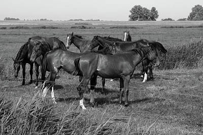 Photograph - Horses In Landscape by Aidan Moran