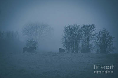 Photograph - Horses In The Mist by Cheryl Baxter