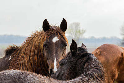 Photograph - Horses by Jay Stockhaus
