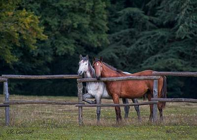 Photograph - Horses Of A Different Colour by CR  Courson