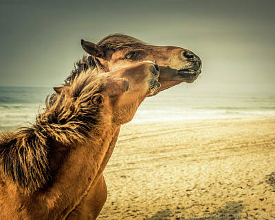 Photograph - Ponies Of Assateague Island by Mark Peavy
