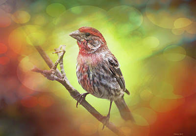 Finch Mixed Media - House Finch by Reese Lewis