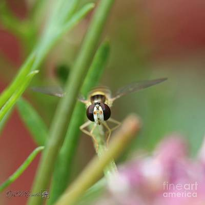 Photograph - Hoverfly by J McCombie
