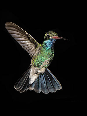 Photograph - Hovering Hummer by Jean Noren