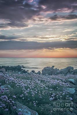 Photograph - Hovs Hallar Sunbeams by Antony McAulay