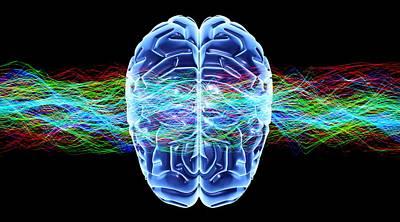 Bird Brain Photograph - Human Brain, Conceptual Artwork by Pasieka
