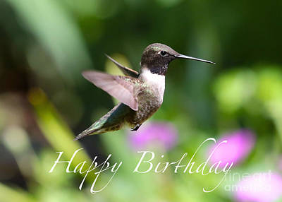 Photograph - Hummingbird Birthday Card by Carol Groenen