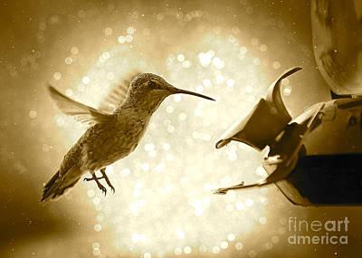 Photograph - Hummingbird Magic - Sepia by Carol Groenen