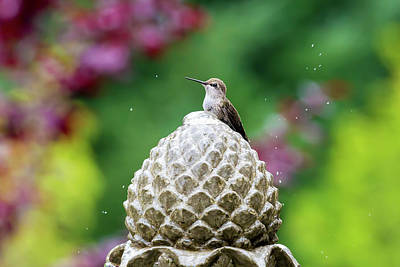 Hummingbird On Garden Water Fountain Art Print by David Gn
