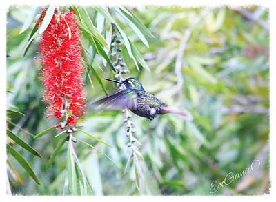 Photograph - Hummingbird by Pascal Schreier