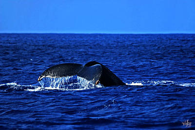 Wyland Photograph - Humpback Whale by Thea Wolff