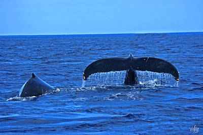 Wyland Photograph - Humpback Whales by Thea Wolff