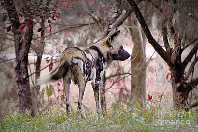 Painting - Hunted by Judy Kay