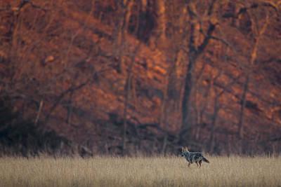 Photograph - Hunter by Ryan Heffron