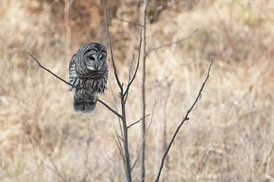 Photograph - Hunting by Linda Shannon Morgan
