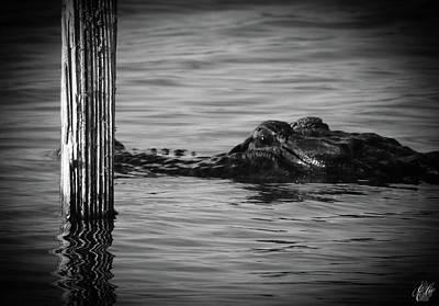 Animals Photos - I Am Gator, No. 87 by Elie Wolf