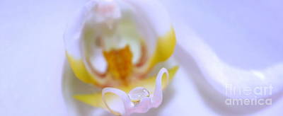 White Orchid Photograph - I Keep Holding On by Krissy Katsimbras