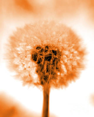 Fuzzy Digital Art - I Wish In Orange by Valerie Fuqua