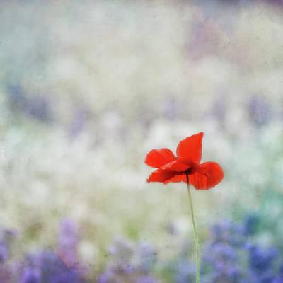 Photograph - I Wish by Robin Dickinson