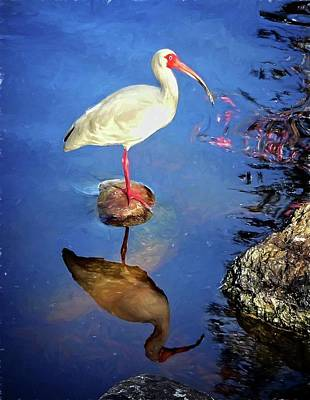 Photograph - Ibis Reflections by Alice Gipson