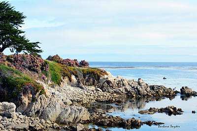 Ice Plant Along The Monterey Shore 2 Art Print by Barbara Snyder
