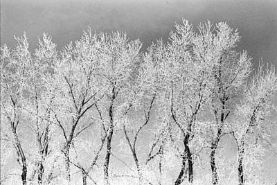 Photograph - Ice Trees by William Kimble