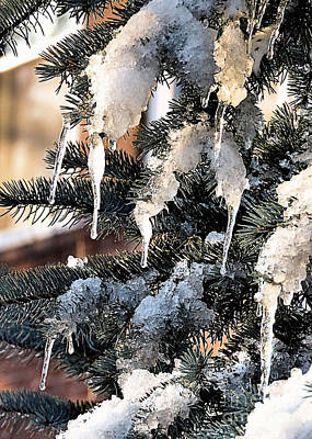 Photograph - Icicles by Janice Drew