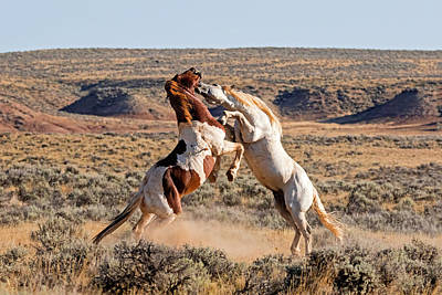 Photograph - Icons Of The American West by Jack Bell