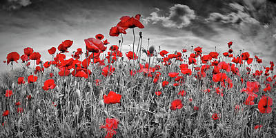 Angiosperm Photograph - Idyllic Field Of Poppies Panoramic Colorkey by Melanie Viola