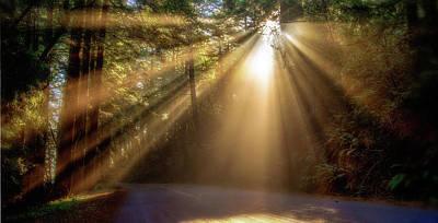 Photograph - Illumination  by Janet Kopper