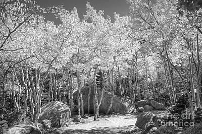 Photograph - Illumination by Pete Hellmann
