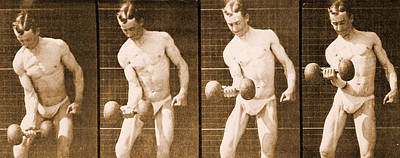 Eadwerd Photograph - Image Sequence From Animal Locomotion Series by Eadweard Muybridge