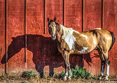 Photograph - #0783 - Buckskin On Red by Heidi Osgood-Metcalf