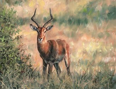 Bush Wildlife Painting - Impala by David Stribbling