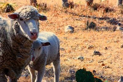 Impoverished Sheep Original by Josh  Montgomery