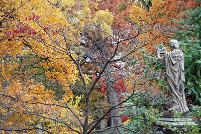 Photograph - In Autumn Trees by Cora Wandel