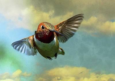 Photograph - In Flight by Sheldon Bilsker